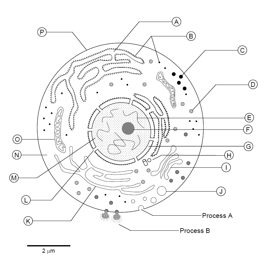 generalized plant cell unlabeled