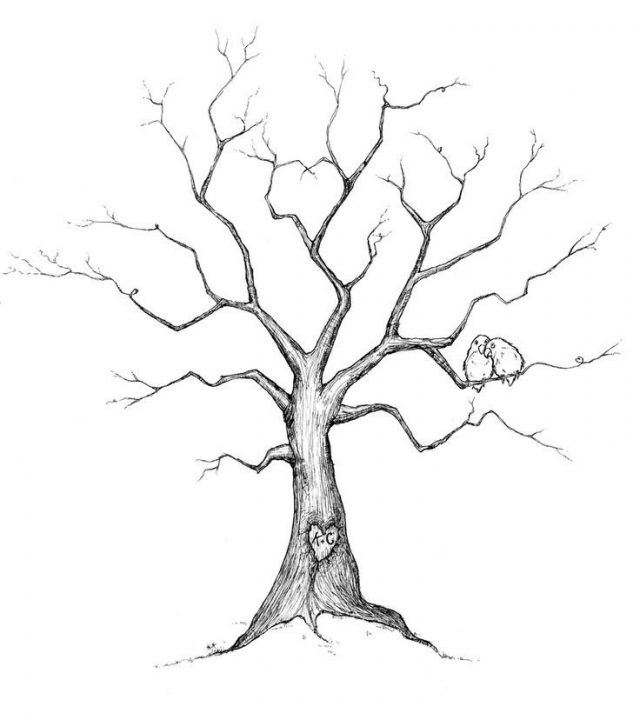 Basic Tree Drawing at GetDrawings Free for personal use Basic