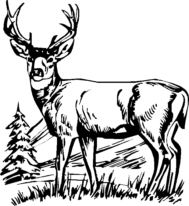 Black And White Deer Drawing at GetDrawings Free for personal