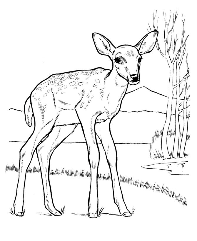 Deer Sketches Printable towelbars