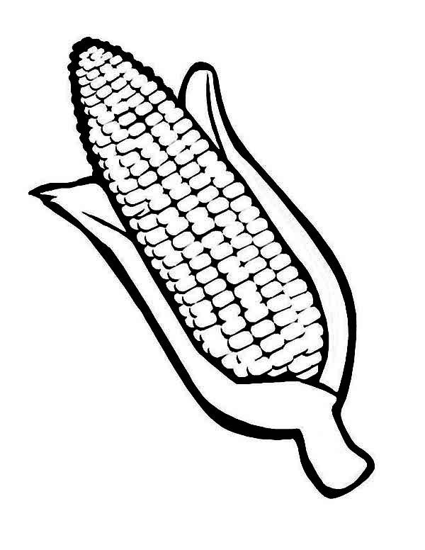 corn drawing image at getdrawings com