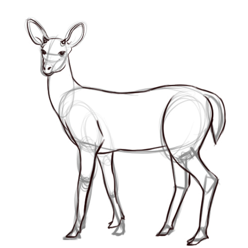 drawings of a deer - Towerssconstruction