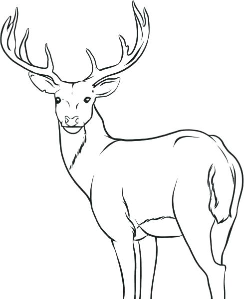 Deer Hunting Drawing at GetDrawings Free for personal use Deer