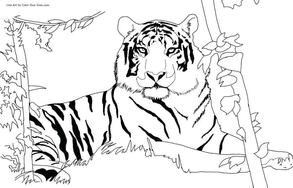 The best free Tiger drawing images Download from 4367 free drawings