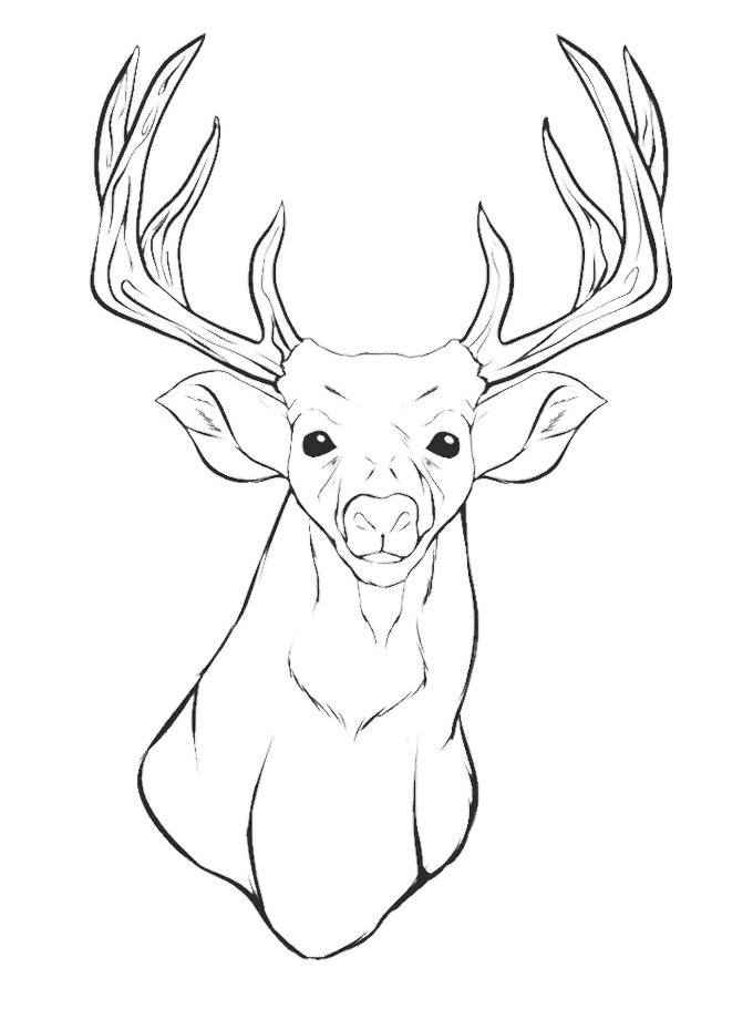 Easy Deer Head Drawing at GetDrawings Free for personal use
