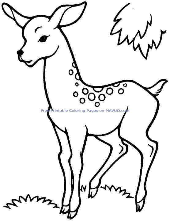 Easy Drawing Of Deer at GetDrawings Free for personal use Easy