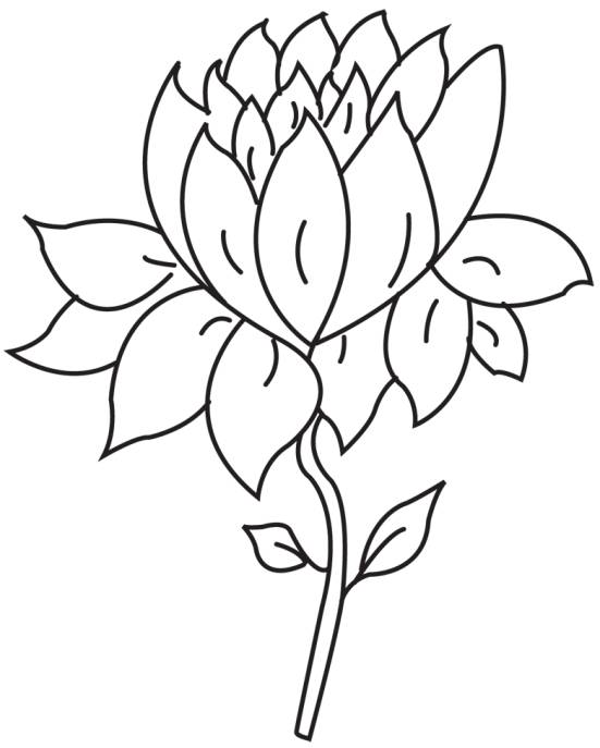 Flower Petal Drawing at GetDrawings Free for personal use