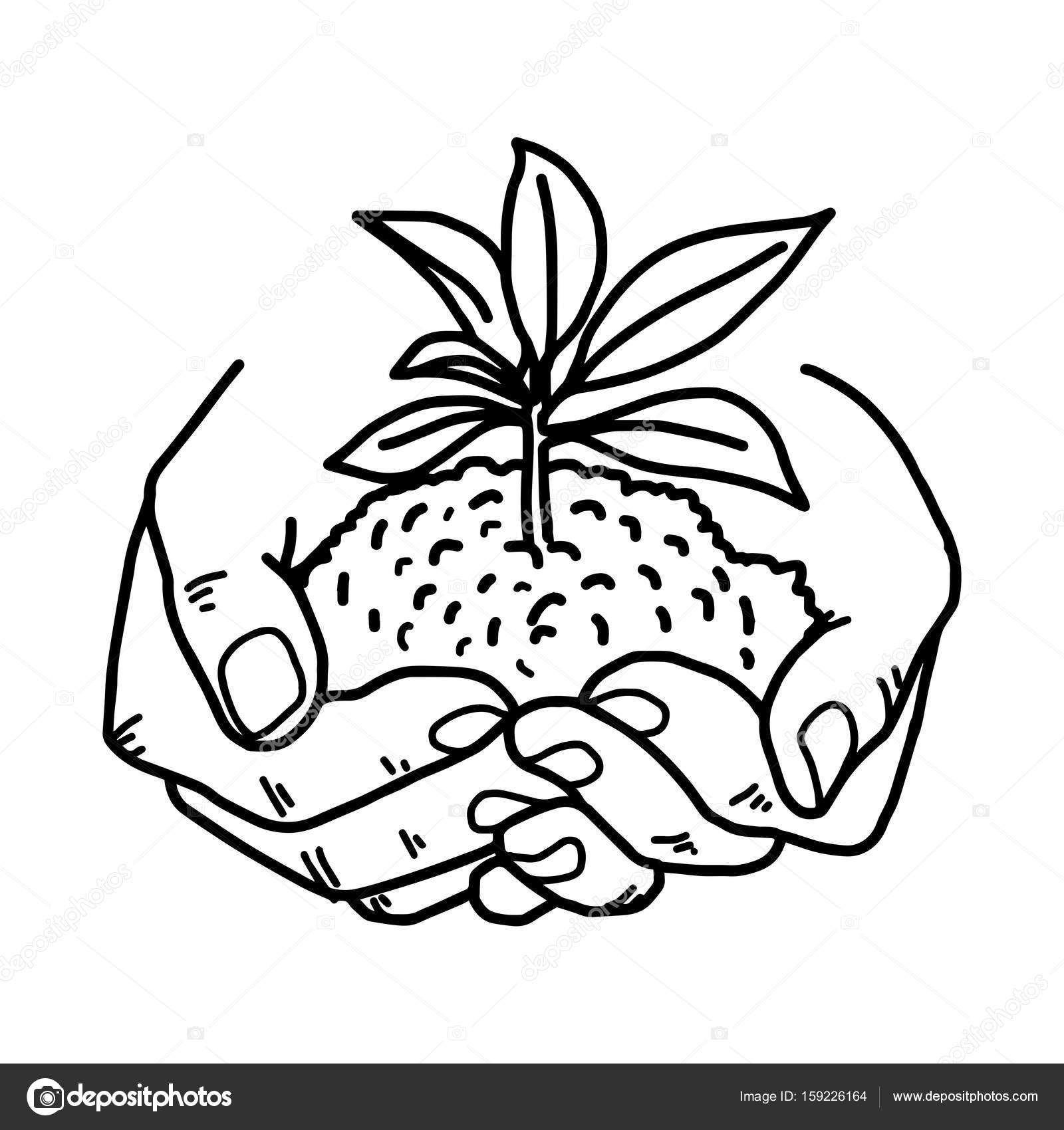 Growing Plant Drawing At Getdrawings Free Download