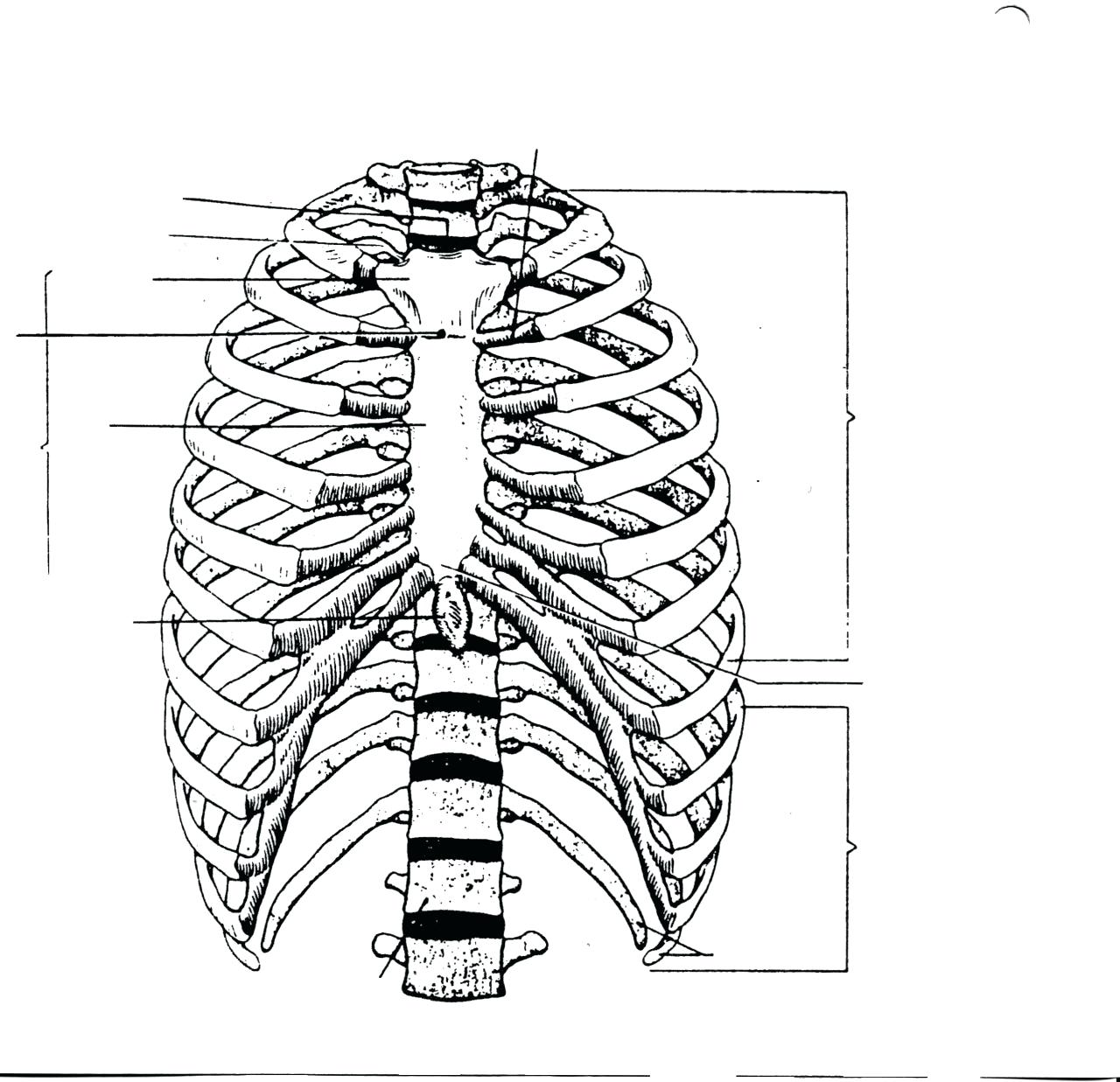 ribs diagram blank