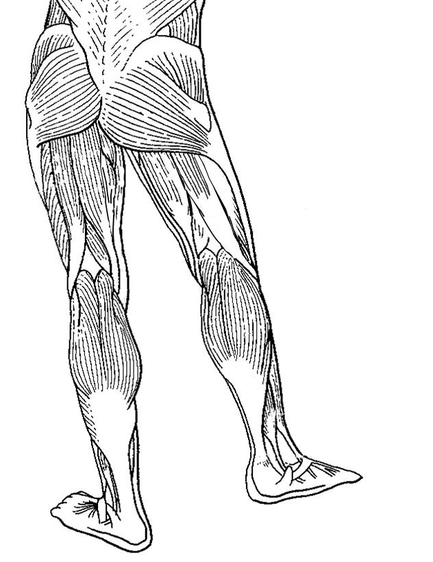 blank leg diagram