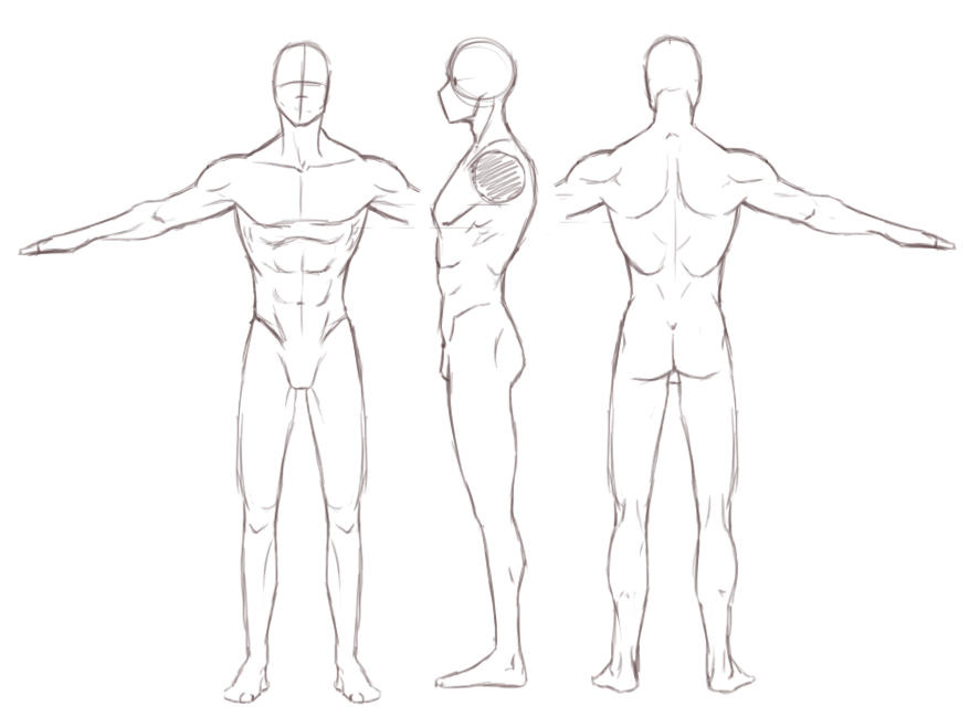 Male Drawing at GetDrawings Free for personal use Male Drawing - character model template