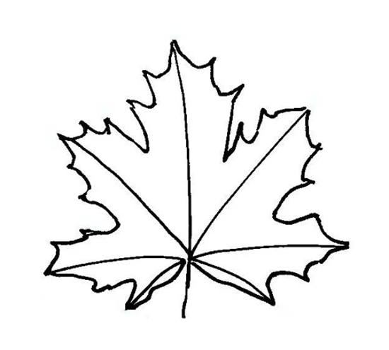 Maple Leaf Drawing Template at GetDrawings Free for personal