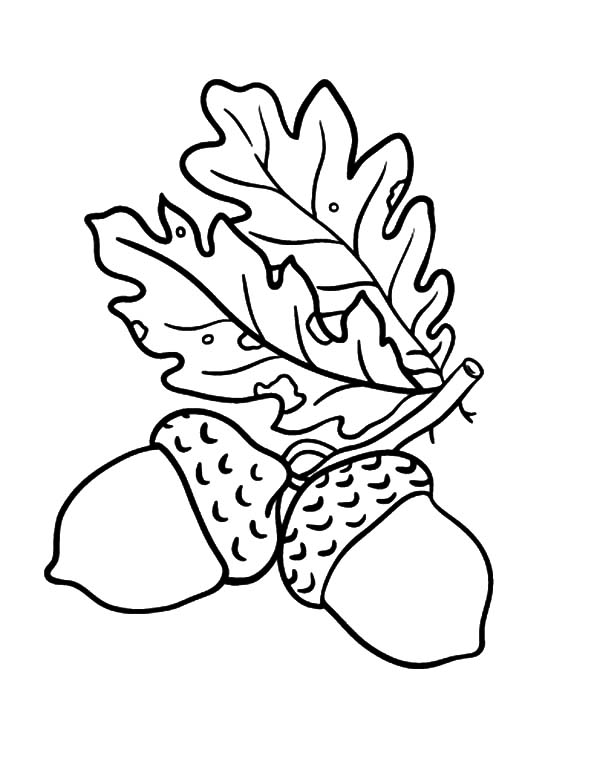 Oak Leaf Drawing at GetDrawings Free for personal use Oak Leaf