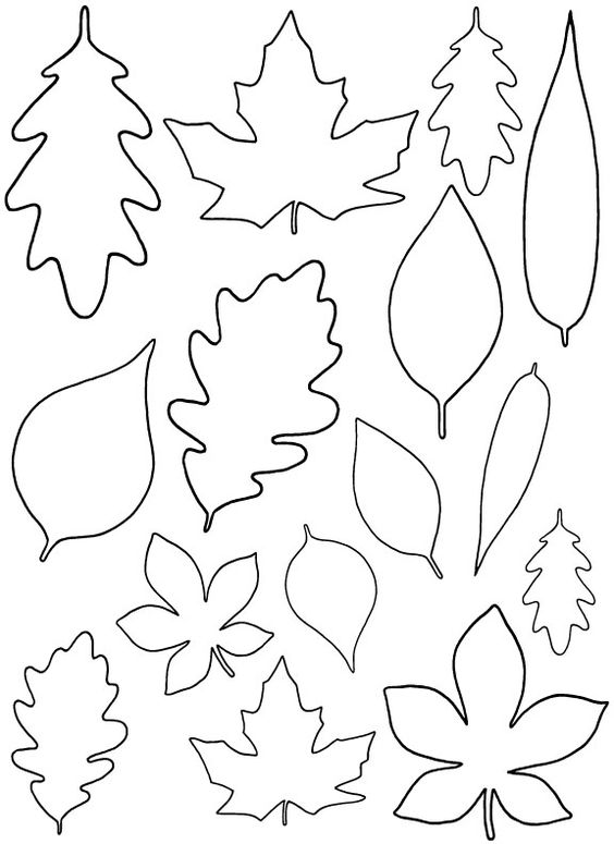 Oak Leaf Drawing Template at GetDrawings Free for personal use - leaf template