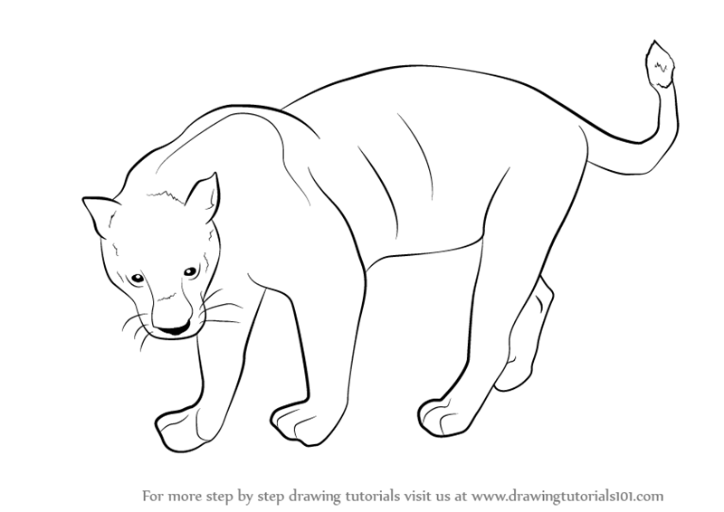 Outline Drawing Of Animals At Getdrawingscom Free For