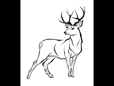 Pencil Drawing Of Deer at GetDrawings Free for personal use