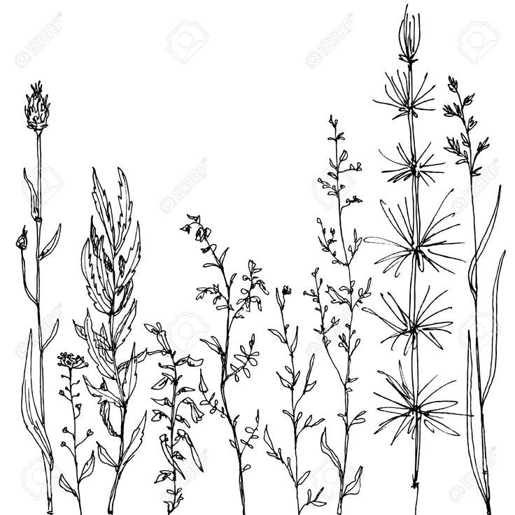Plant Line Drawing at GetDrawings Free for personal use Plant - line drawing