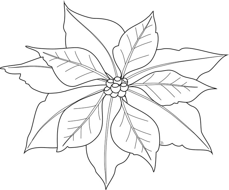 Poinsettia Silhouette at GetDrawings Free for personal use