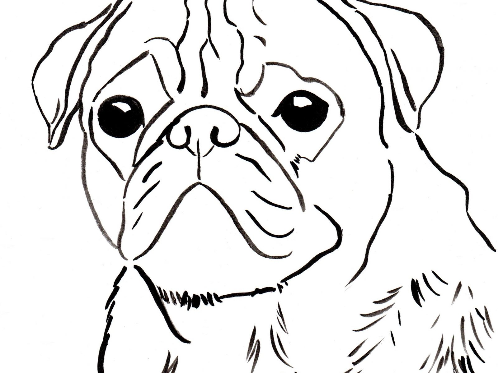 Pug Dog Drawing At Getdrawingscom Free For Personal Use