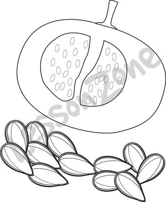 Pumpkin Seed Drawing at GetDrawings Free for personal use