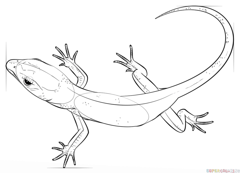Reptile Coloring Pages - Costumepartyrun