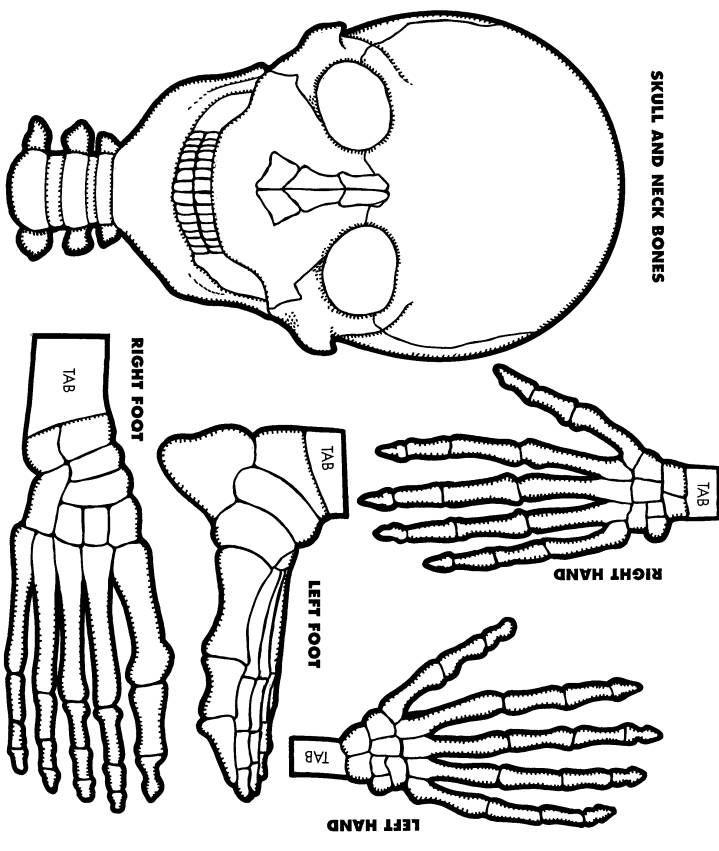 print out skeletons - Klisethegreaterchurch - halloween templates to cut out