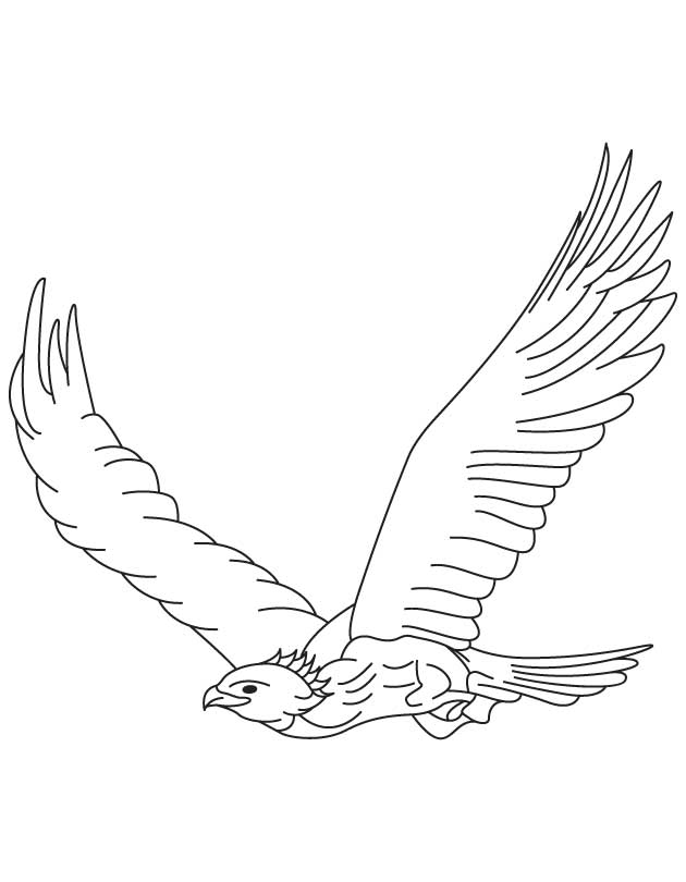 Soaring Eagle Drawing at GetDrawings Free for personal use