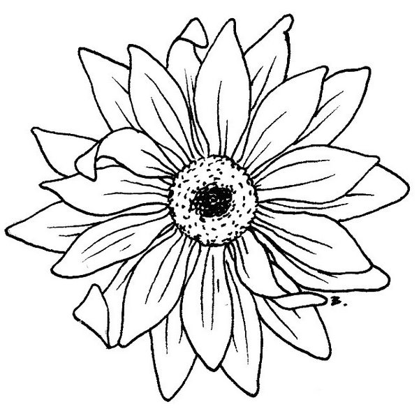 Sunflower Drawing Pictures at GetDrawings Free for personal