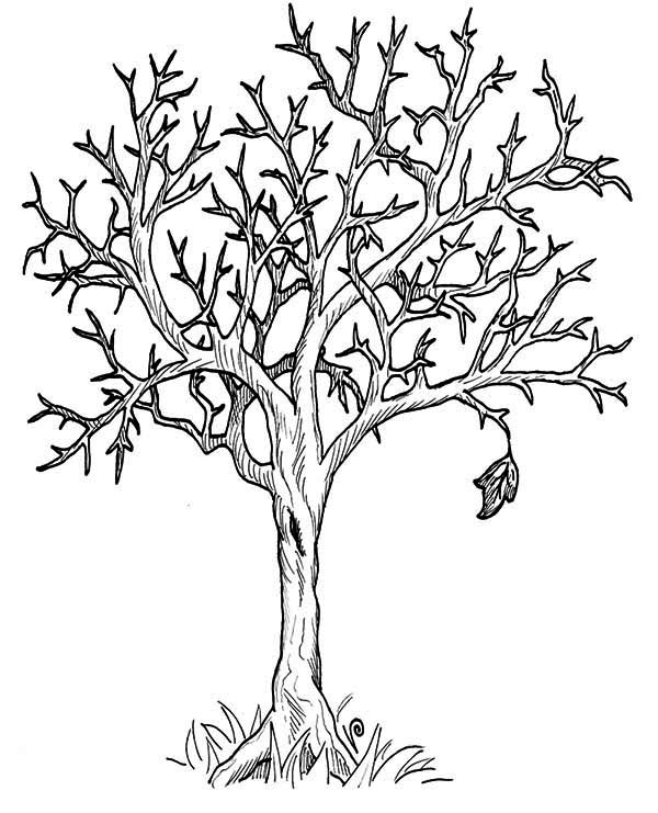 printable trees with no leaves  tree leaf coloring pages
