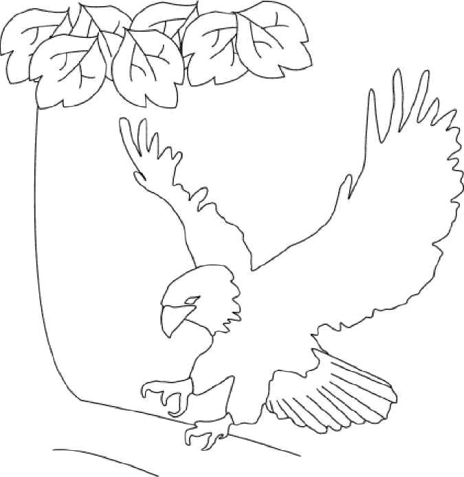 United States Drawing at GetDrawings Free for personal use