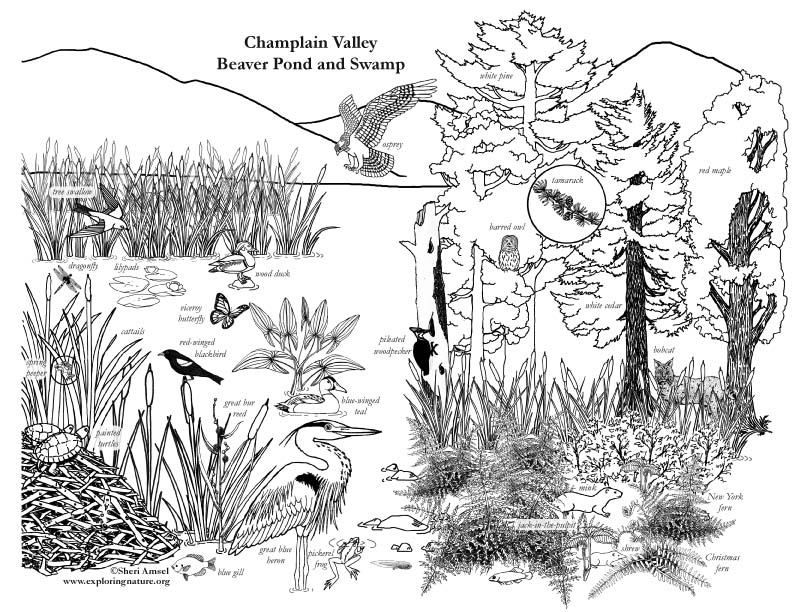 Wetland Drawing At Getdrawingscom Free For Personal Use