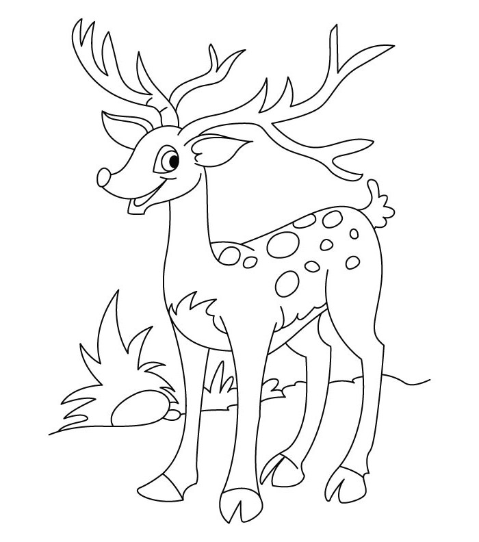 White Tail Deer Drawing at GetDrawings Free for personal use