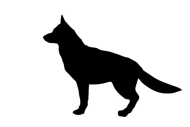 Large Of German Shepherd Sitting
