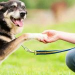 dog-training-tips-tricks-not-training-dog