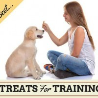 How To Use Dog Treats Correctly in Dog Training