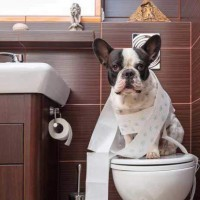 Puppy Toilet Training - How To Potty Train A Puppy Fast & Easy