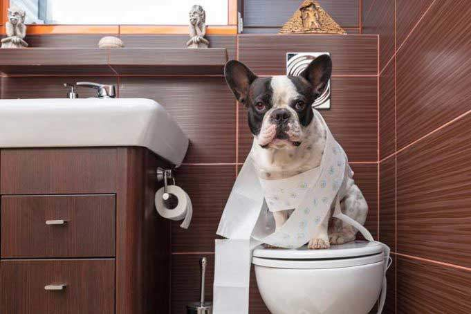 puppy toilet training potty train puppy fast easy