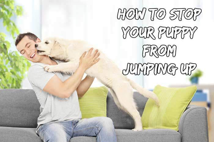 stop-your-puppy-from-jumping-up