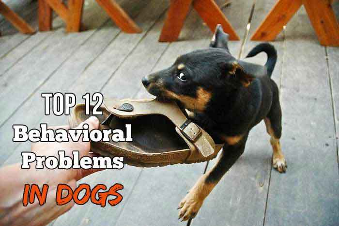 top 12 behavioral problems dogs solutions