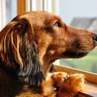 How To Stop Separation Anxiety In Dog