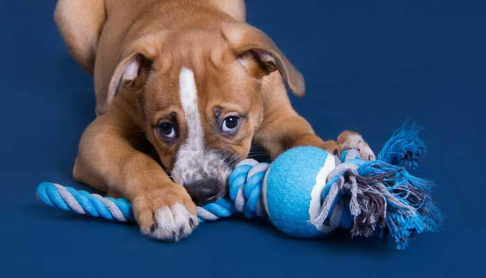 The 11 Best Puppy Toys To Keep Them Busy