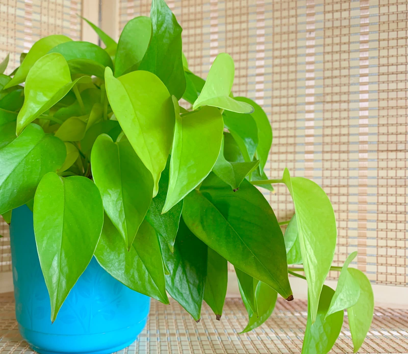 Indoor Plants Indoor Plants That Clean The Air How Do They Remove Toxins Get