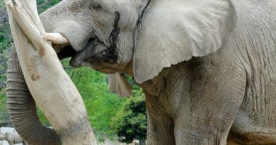 asa zoo elephant