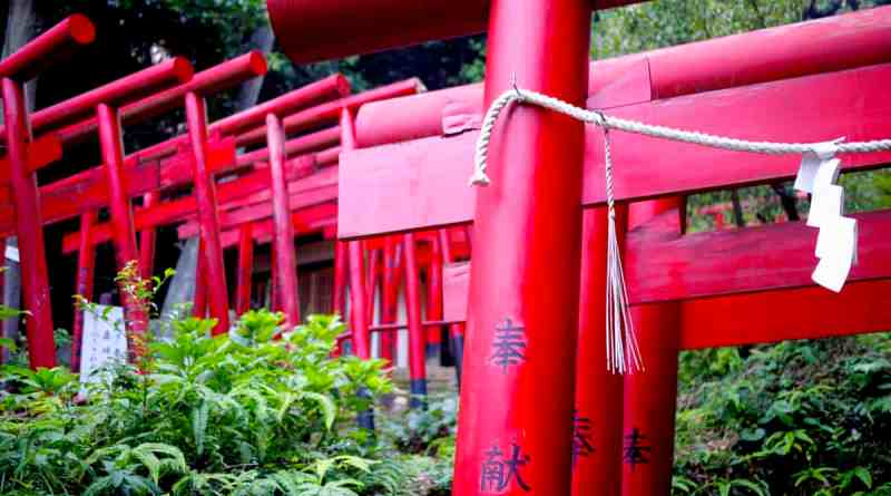 Kinkō Inari Shrine - 10
