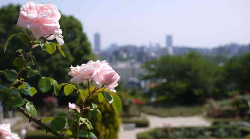 Great view of 广岛 city from the rose garden in 牛下崇光公园