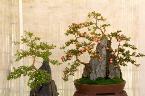 hiroshima-castle-chrysanthemum-exhibition-11