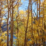 Fish Lake Through the Aspens