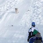 Even Sidekick Suki loves sledding