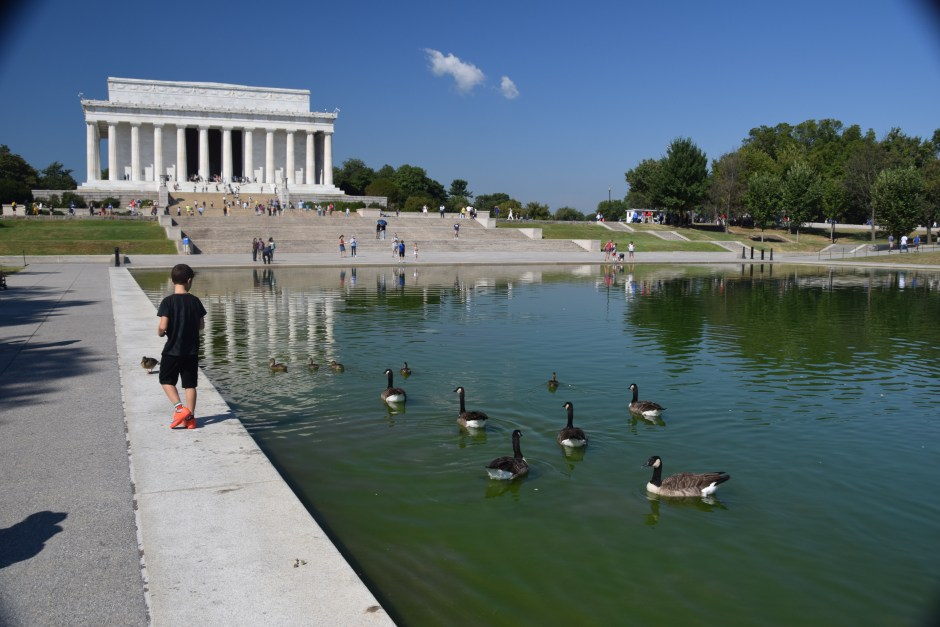 National Mall Ducks