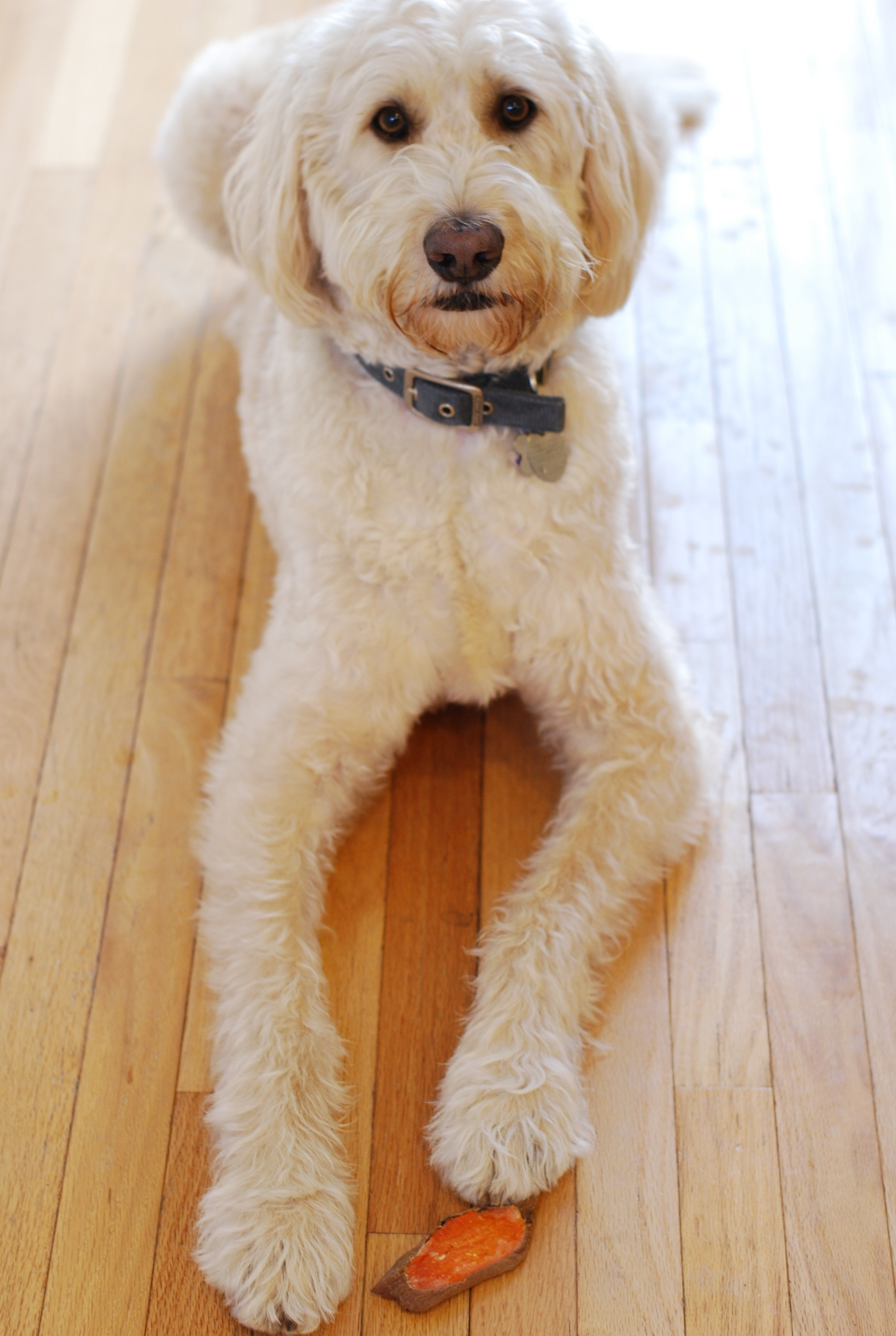 Fullsize Of Labradoodle Or Fried Chicken